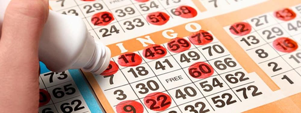 Beginners Guide to Bingo
